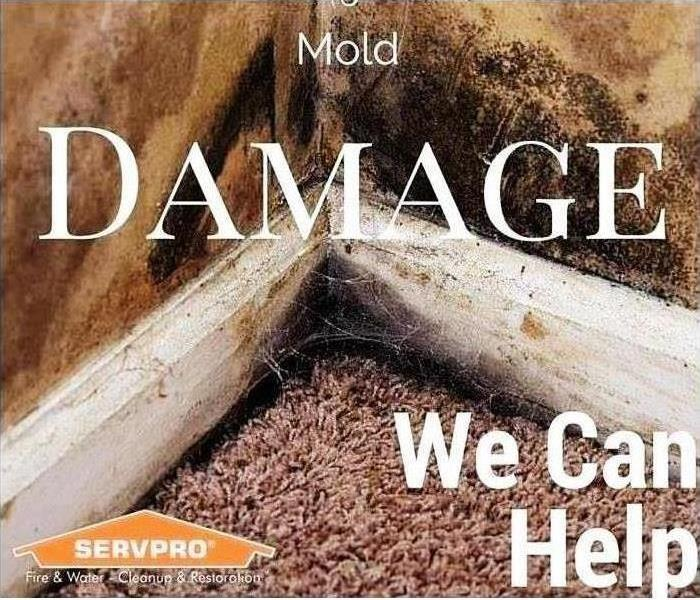 Mold Remediation The Relationship Between Carpet and Mold